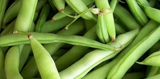 An American favorite, Early White Half Runner Beans originated in Calhoun County, West Virginia.