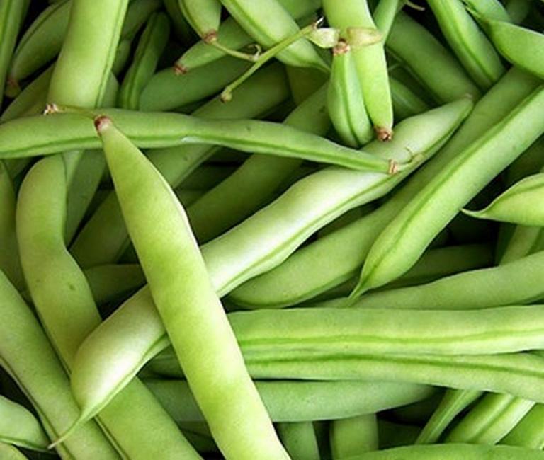 Early white half-runner beans originated in Calhoun County