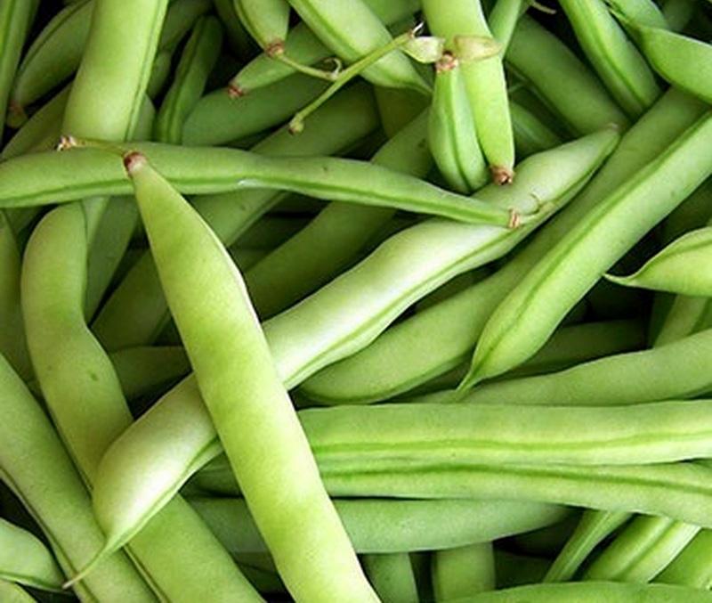 An American favorite, Early White Half Runner Beans originated in Calhoun County, West Virginia.