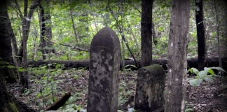 Headstones hide in the dim light of wooded Red Ash Island in the New River Gorge.