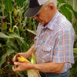 Sam Tuckwiller examines a corn cob in Greenbrier County.