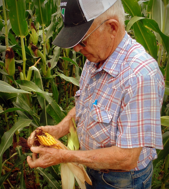 Sam Tuckwiller gauges the harvest based on the appearance of the woody ring in a corn cob.