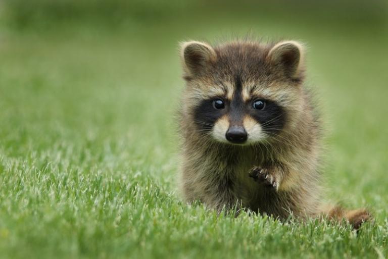 W.Va. Wildlife Center resumes regular hours, rates