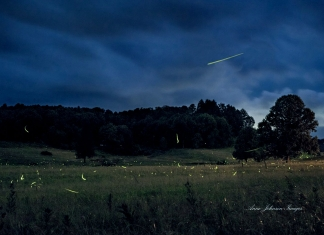 Fireflies dance in a field in Nicholas County, West Virginia.
