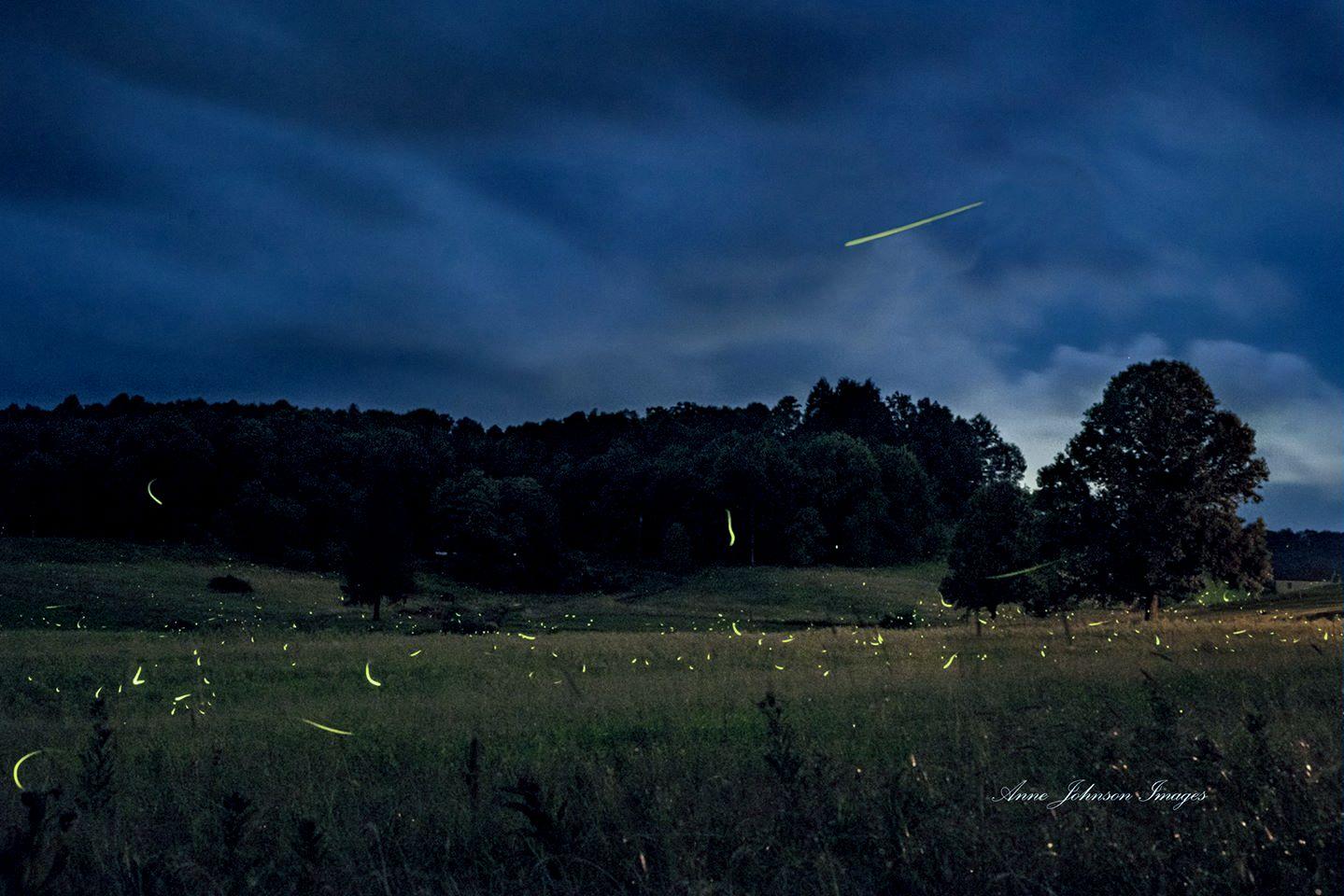 Fireflies dance in a field in Nicholas County, West Virginia.