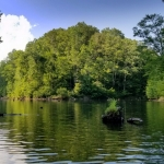 Forest surrounds the narrow arms of Woodrum Lake in southern Jackson County.