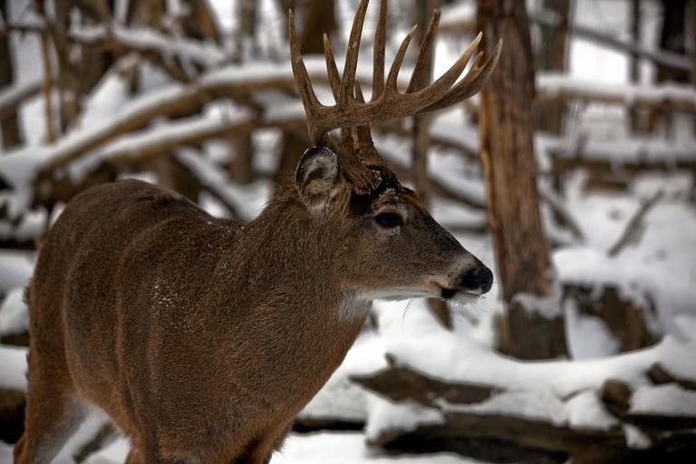 Larry Oakley tells the tale of an old West Virginia hunter