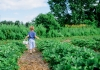 Specialty crops are the future of the West Virginia agricultural economy.