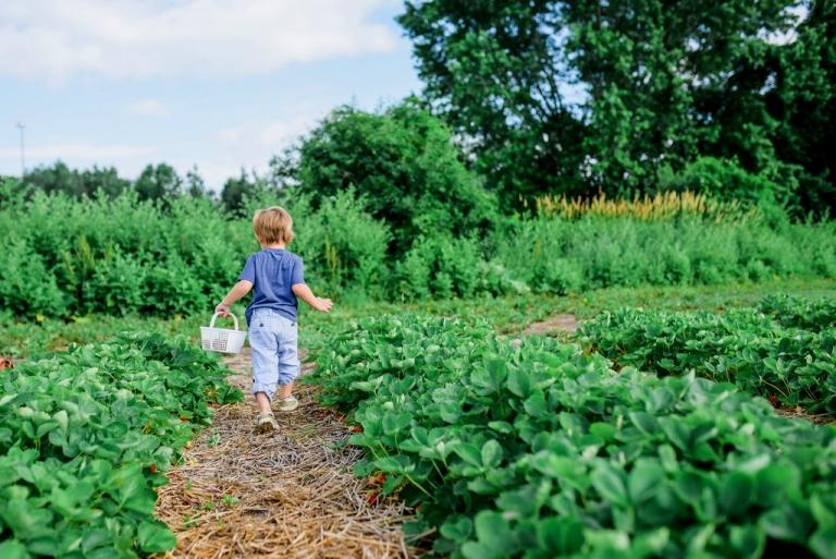 W.Va. DA requests applications for specialty crop grants