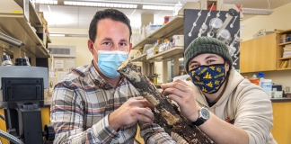 WVU professor Matt Kasson and graduate student Angie Macias work on millipede research in their lab.
