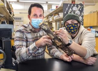 WVU professor Matt Kasson and graduate student Angie Macias work on millipede research in their lab.