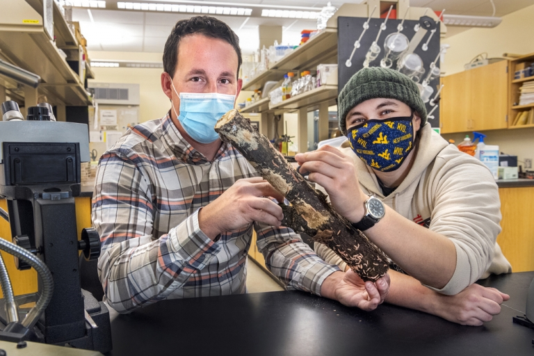 WVU mycologists receive National Geographic grant to study millipedes
