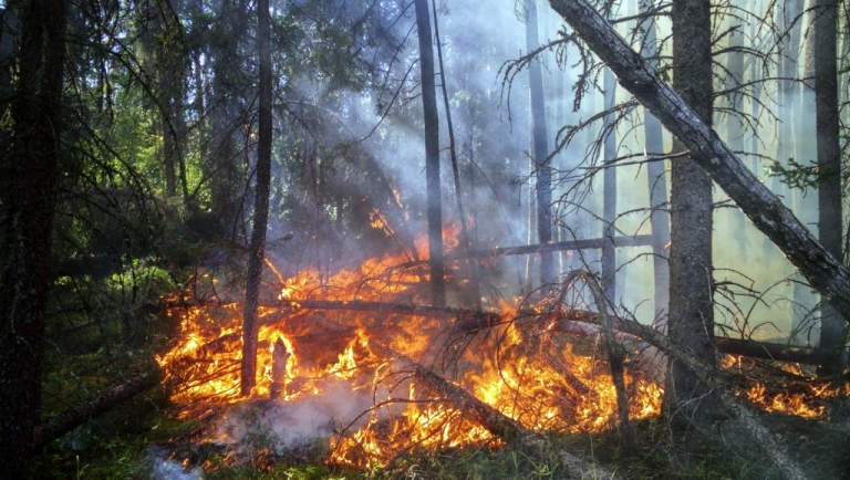 WV Division of Forestry urges public to practice fire safety