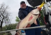 John Gibson displays the new West Virginia record freshwater drum, taken in the Kanawha River.