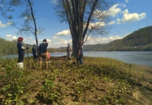 Students plant trees at the head of Wheeling Island in Wheeling, West Virginia. (Photo courtesy West Liberty University)