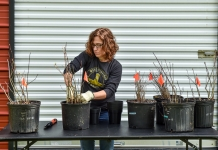 Liz Moss prepares heirloom seedlings harvested from the West Virginia State University campus.
