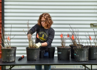 Liz Moss prepares heirloom seedlings harvested from the West Virginia State University campus.