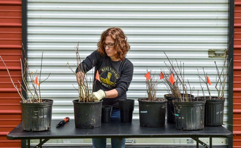 Plant a part of W.Va. State University history with oak seedlings