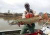 A biologist displays a muskellunge on the Ohio River.