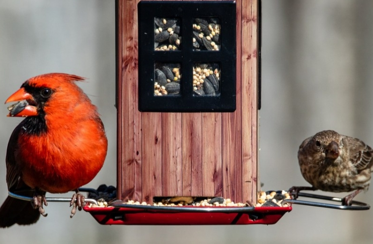 Birds gather at a feeder in the Appalachian Mountains.