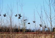 Biologists have introduced two changes to 2021-'22 waterfowl regulations.