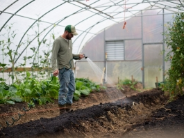 A young West Virginia farmer tends a greenhouse crop.